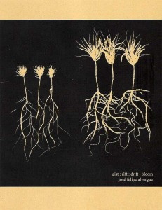 gist : rift : drift : bloom josé felipe alvergue ISBN: 9780989313230 Price: $17.95